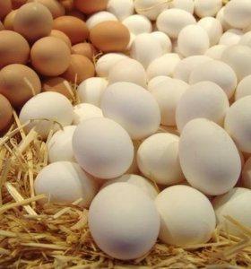 Яйцо куриное, гусиное, цесариное