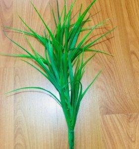 Растение.