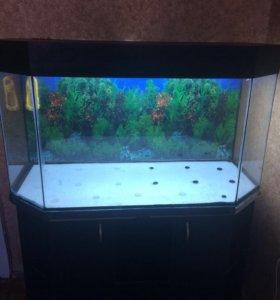 Продам аквариум 250 литров, с тумбой