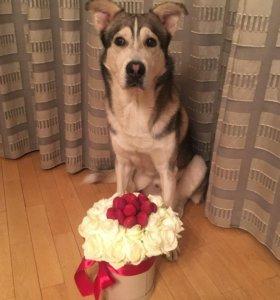 Букет из 21 белой розы и клубники