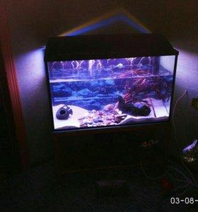 Продается аквариум объемом 250 литров.