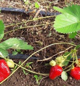 Капельный высокоурожайный полив РДВС