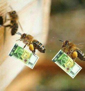 Сниму рой пчёл.
