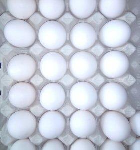 Яйцо отборное.