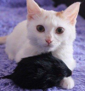 Отдам ласкового котенка