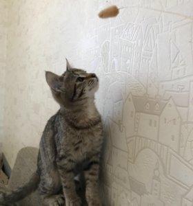Котята ищут надёжный дом!