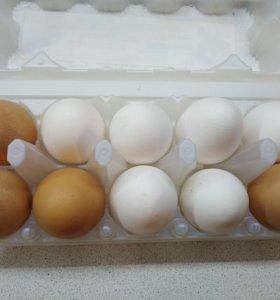 Яйцо 80 рублей за 10 шт.