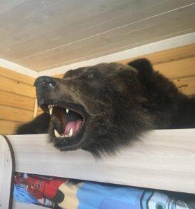 Ковёр из шкуры бурого медведя