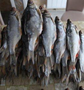 Рыба сорожка вяленая