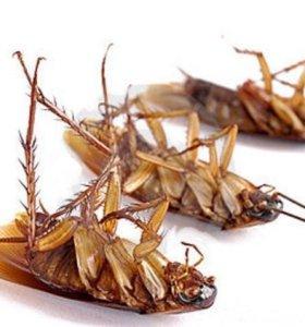 Уничтожение тараканов и других насекомых
