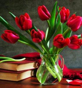 Луковица тюльпанов.