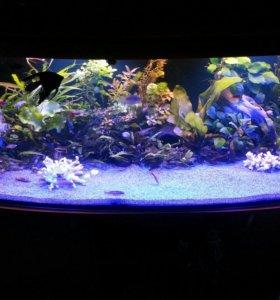 Аквариумные растения, рыбки, улитки