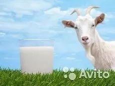 Продам КОЗЬЕ домашнее молоко (доставка бесплатно).