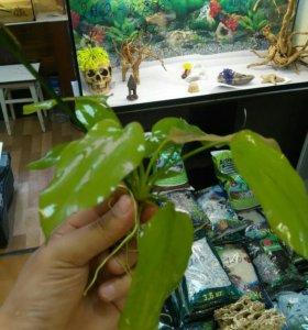 Растения из своего аквариума