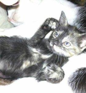 Милый котёнок ищет семью)))