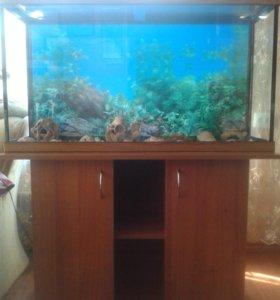 аквариум.