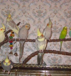Попугайчики