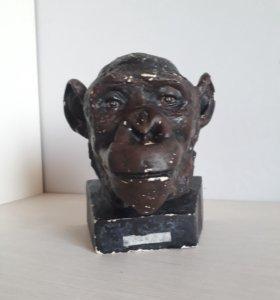 Голова шимпанзе