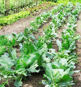 Участок, 25 сот., сельхоз (снт или днп)