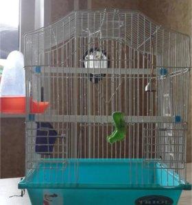 для волнистого попугая