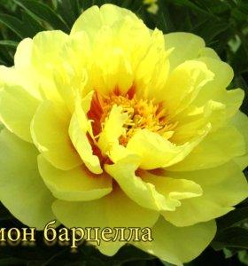продажа декоративных культур, цветов. есть все!!!