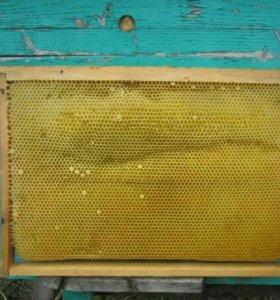 Рамки пчелиные