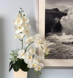 Интерьерная композиция с орхидеями