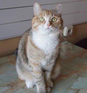 Кошка Ириска