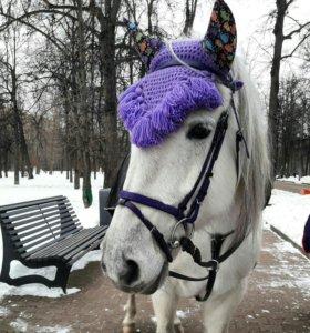 На лошадь