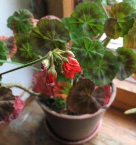 Домашние цветы