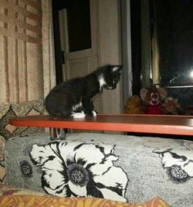 Отдам котенка в добрые руки от кошки мышеловки
