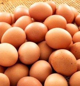 Яйца домашнии