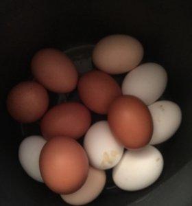 Яйца домашние куриные