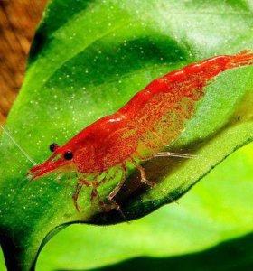 Креветки ,рыбки, растения