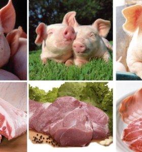 Свинина с личного подворья