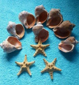 Морские ракушки и звёзды