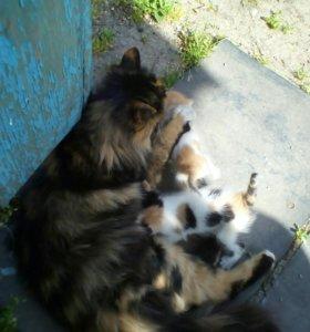 Котенок(девочка)