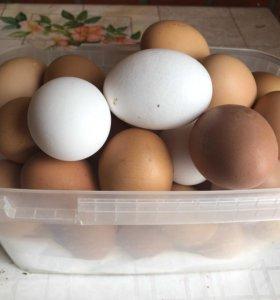 Продам деревенское куриное яйцо.