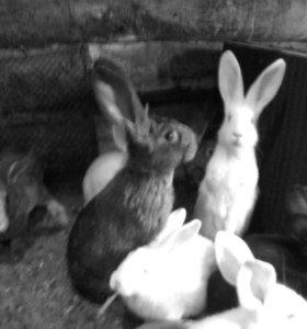 Кролики  все вопросы по телефону.