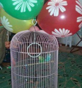 2 волнистых попугая(девочка,мальчик)