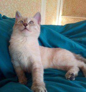 Кошка Кокосита