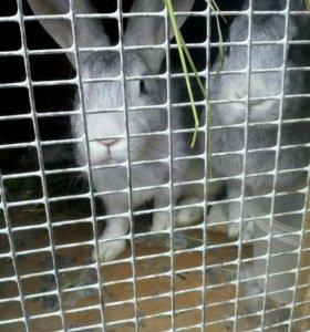 Кролики,белые,серые,чёрные.