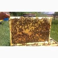 Продам пчелосемьи сильные и здоровые