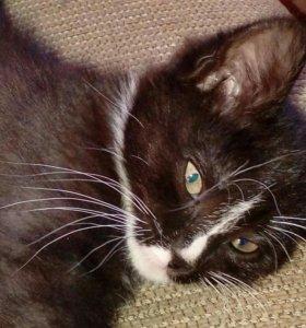 Кошка Буся ищет дом