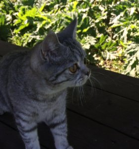 Кошечка ищет котика,для вязки