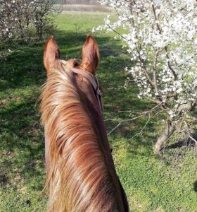База отдыха и конный прокат