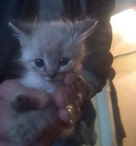 отдам в хорошие руки кошек