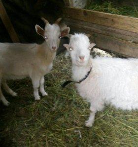 Козлята.коза .гусята