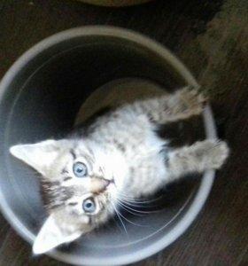 Замурчательный котенок(08.03)