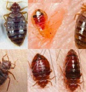 Уничтожение клопов избавиться от насекомых.